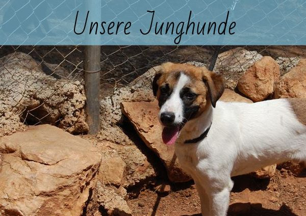 Unsere Junghunde
