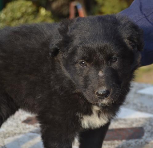 titicaca01